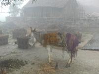 Donkey in the fog