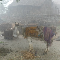 Donkey in the fog