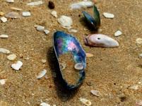 Treasures of the beach