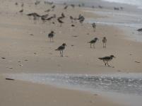 Birds enjoying the beach